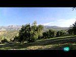 La dieta mediterránea - El aceite de oliva