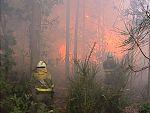 Reporteros del telediario - El 96% de los incendios que se producen en España son intencionados