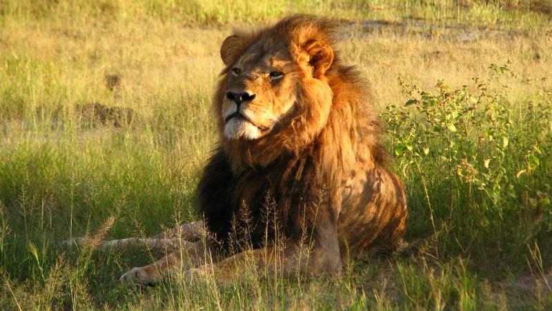 Nómadas - Zimbabue, el rugido de África - 12/08/18 - escuchar ahora