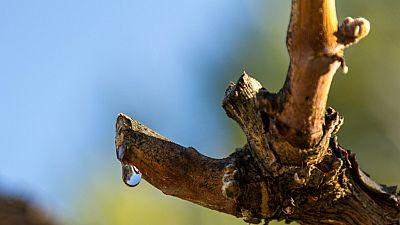Vivanco compartiendo cultura del vino - 'Marzo, el mes en el que las cepas lloran' - 04/03/16 - Escuchar ahora