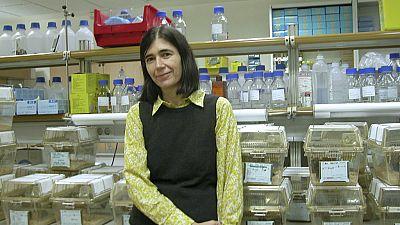 España vuelta y vuelta - María Blasco logra alargar la vida de unos ratones gracias a la telomerasa - Escuchar ahora