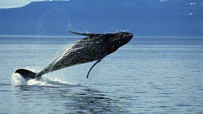 Los mares relatados - Las ballenas también eran símbolos - Escuchar ahora