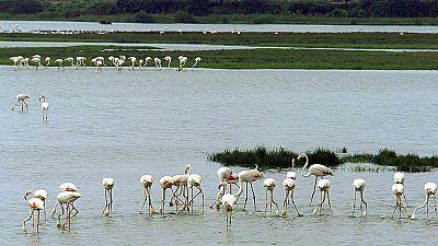 Documentos RNE - Parques Nacionales Españoles, red de biodiversidad - 13/08/18 - escuchar ahora