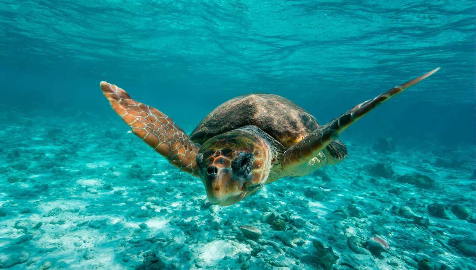 Españoles en la mar - Al rescate de la tortuga boba - escuchar ahora