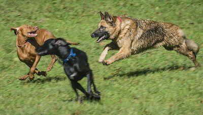 Fauna cercana - Perro atacado por otro perro en la calle - 17/10/17 - Escuchar ahora