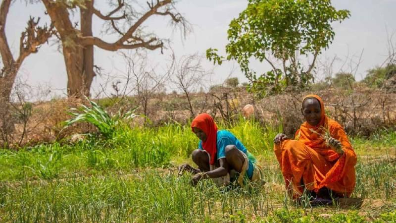 Las migraciones forzadas por el cambio climático - Escuchar ahora