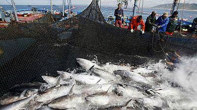 Memoria de delfín - El atún: hasta 700 kilos de sabor e inteligencia - 30/04/18 - escuchar ahora