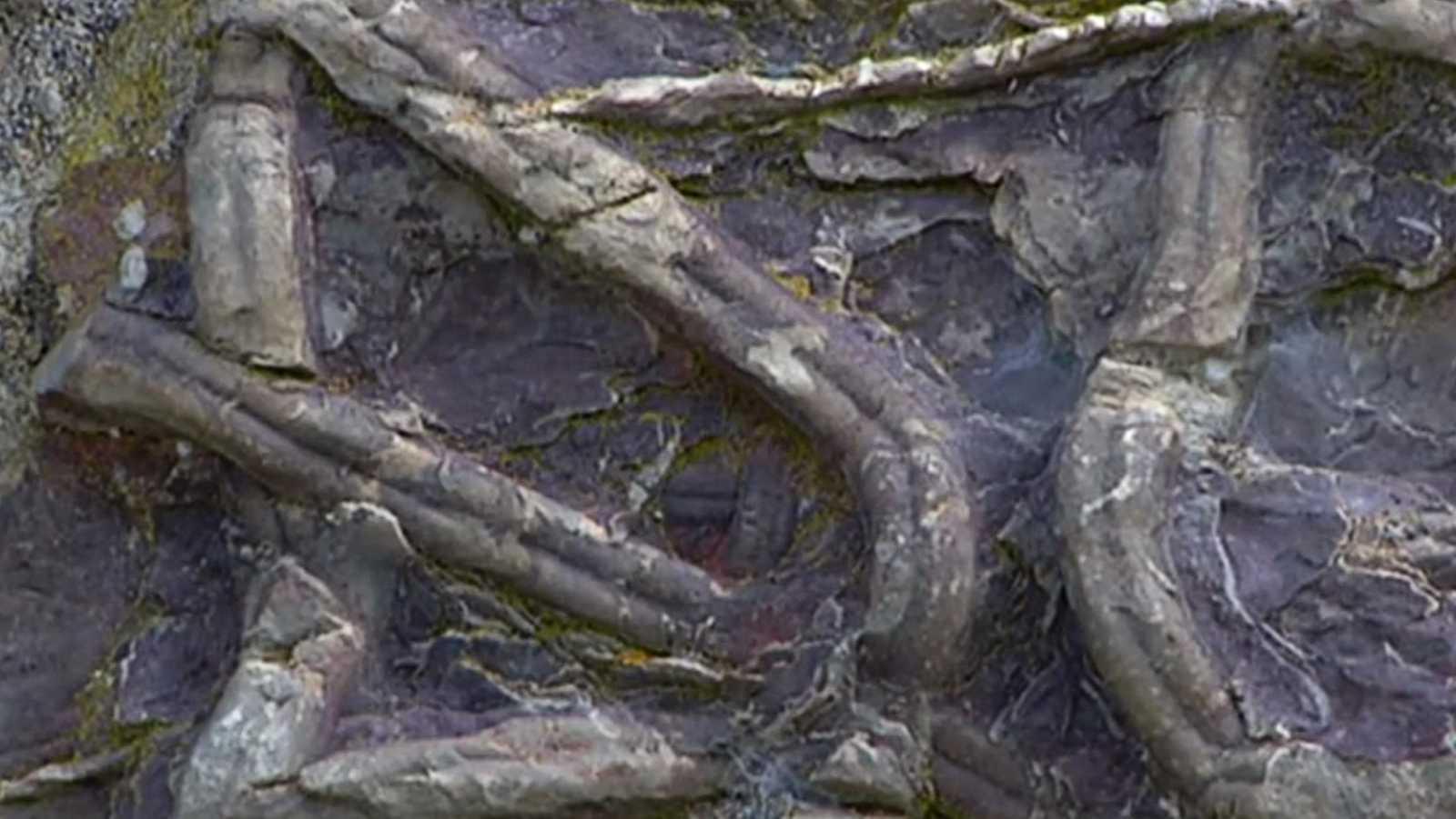 Turismo en comunidad - Ruta de las Huellas Fósiles - 18/07/18 - escuchar ahora