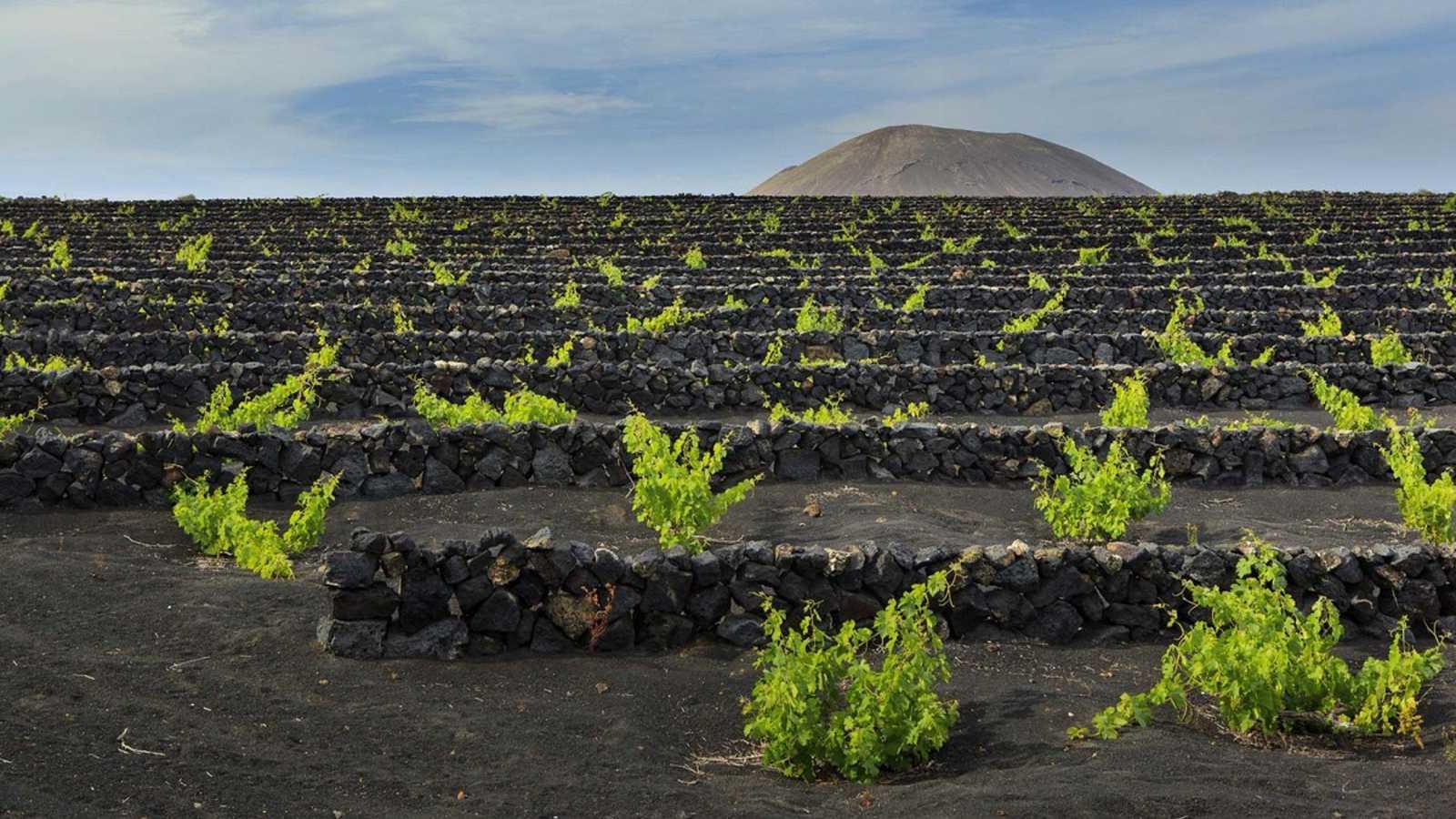 Turismo en comunidad - El potencial enoturístico de Gran Canaria - 01/08/18 - escuchar ahora