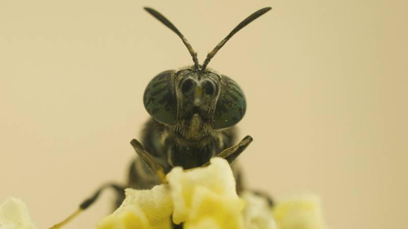 De lo más natural - Pan de larva de mosca y no es ciencia ficción - 19/08/18 - escuchar ahora