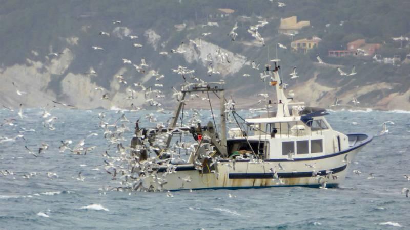 Zepamed, apuesta por salvar las aves marinas - Escuchar ahora