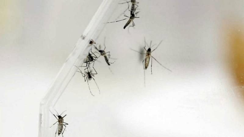 Tres casos de dengue en España