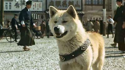 Memoria de delfín - Hachiko: perros y también héroes de cuatro patas - 10/11/18 - escuchar ahora