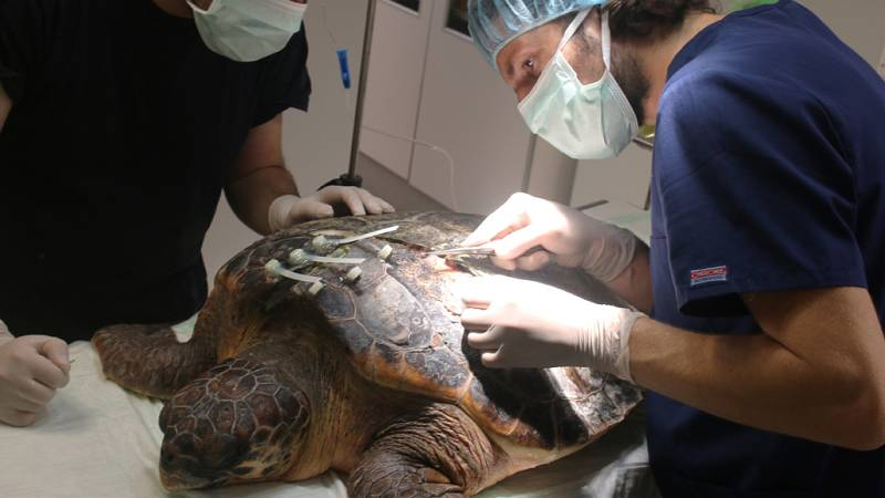 Españoles en la mar - Las tortugas y el mal del buceador - escuhar ahora