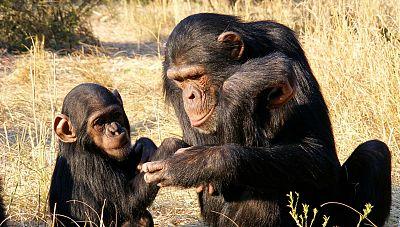 Memoria de delfin -  Primates: los santuarios de Fossey, Goodall y Galdikas - 12/01/19 - escuchar ahora