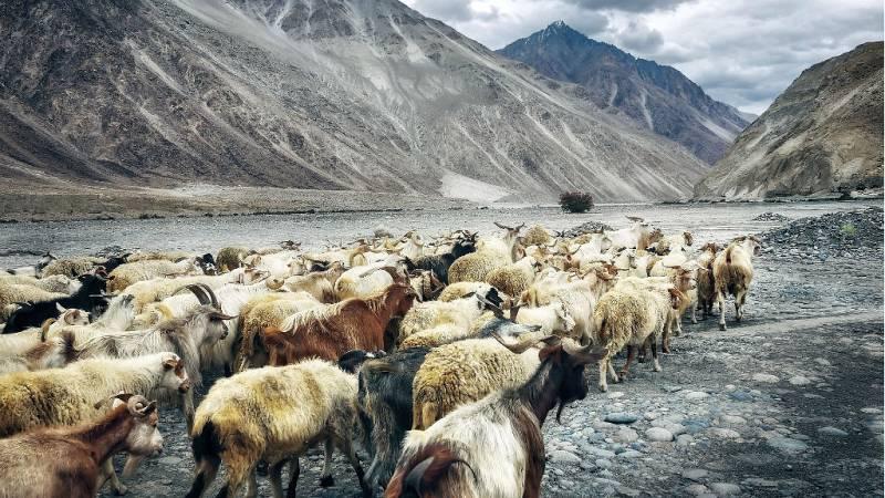 Nómadas - Ladakh: las alturas del pequeño Tíbet - 02/02/19 - Escuchar ahora