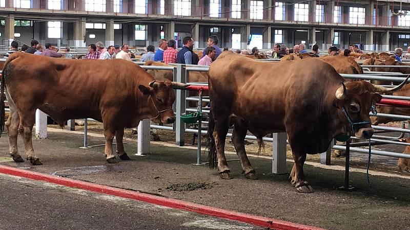 Las mañanas de RNE con Íñigo Alfonso - La ganadería en Cantabria, una actividad tradicional amenazada por la falta de relevo generacional - Escuchar ahora