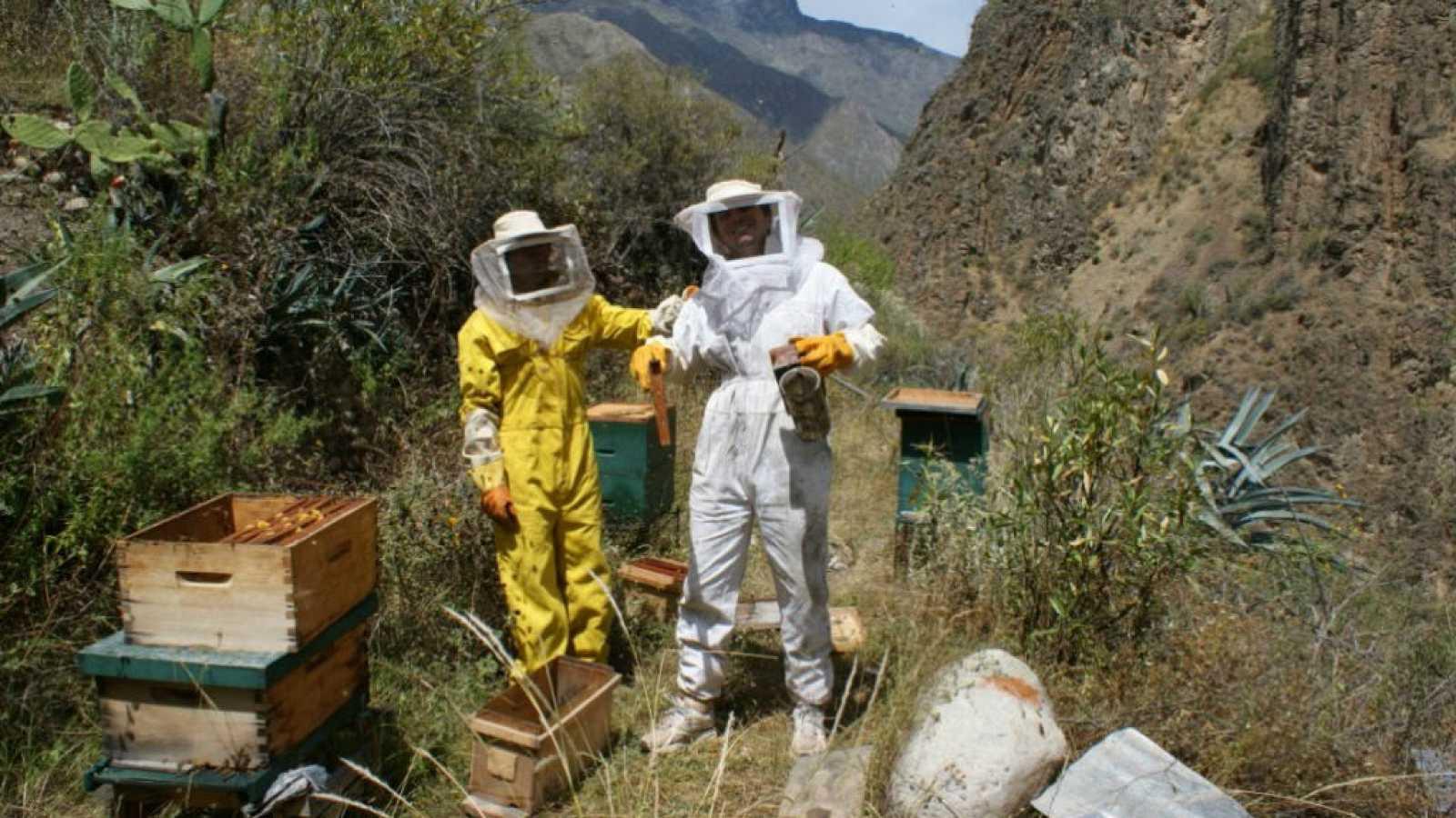 Mundo aparte - La miel que empodera a las mujeres - 2/06/19 - Escuchar ahora
