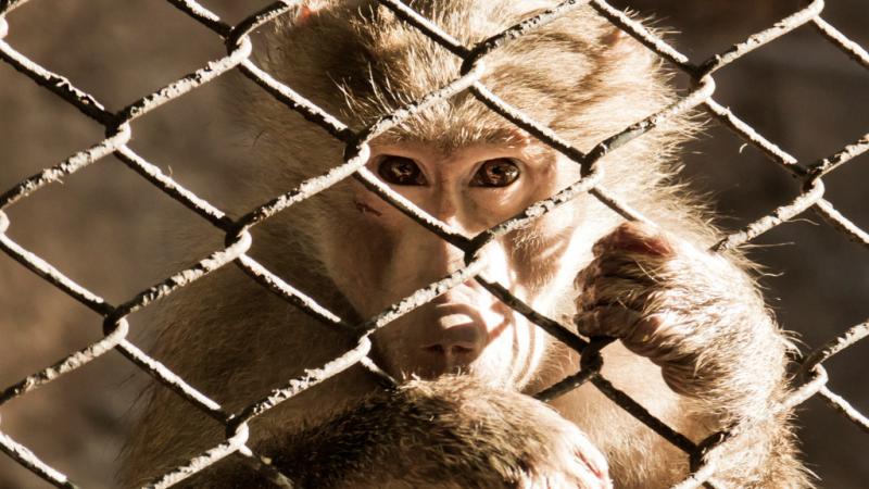 El tráfico ilegal de especies mueve más dinero que el de armas o drogas - escuchar ahora