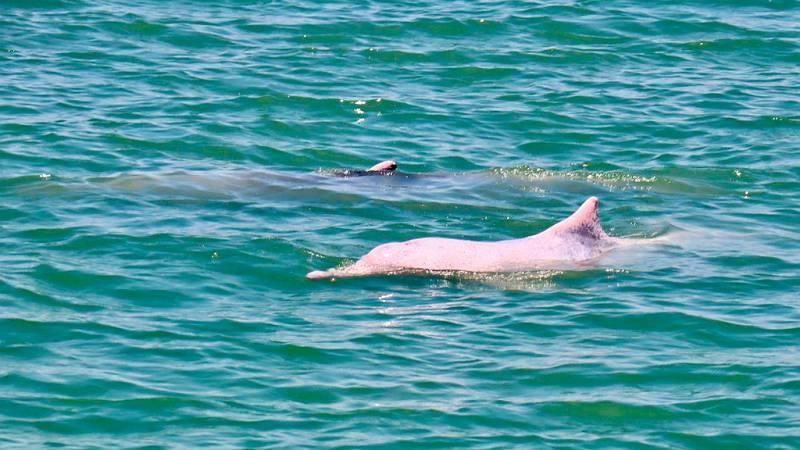 Global 5 - Khanom, Tailandia (III): el hogar de los delfines rosas - 23/07/19 - Escuchar ahora