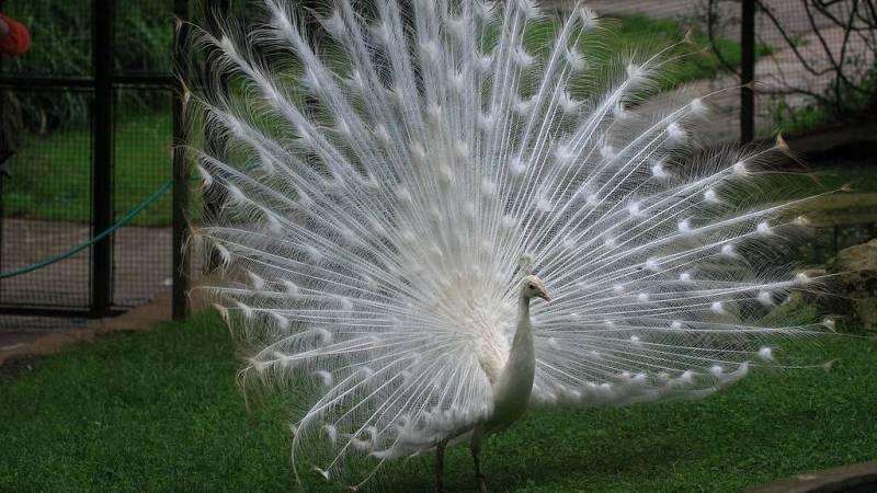 Animales y medio ambiente - Pavos en el Zoo de Santillana - 11/08/19 - Escuchar ahora
