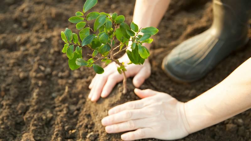 Todo Noticias Tarde - Un árbol por el planeta - Escuchar ahora