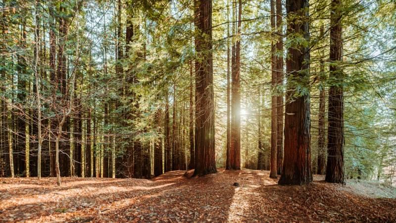 Diez minutos bien empleados - Un convenio colectivo de mínimos para los forestales - 23/09/19 - Escuchar ahora