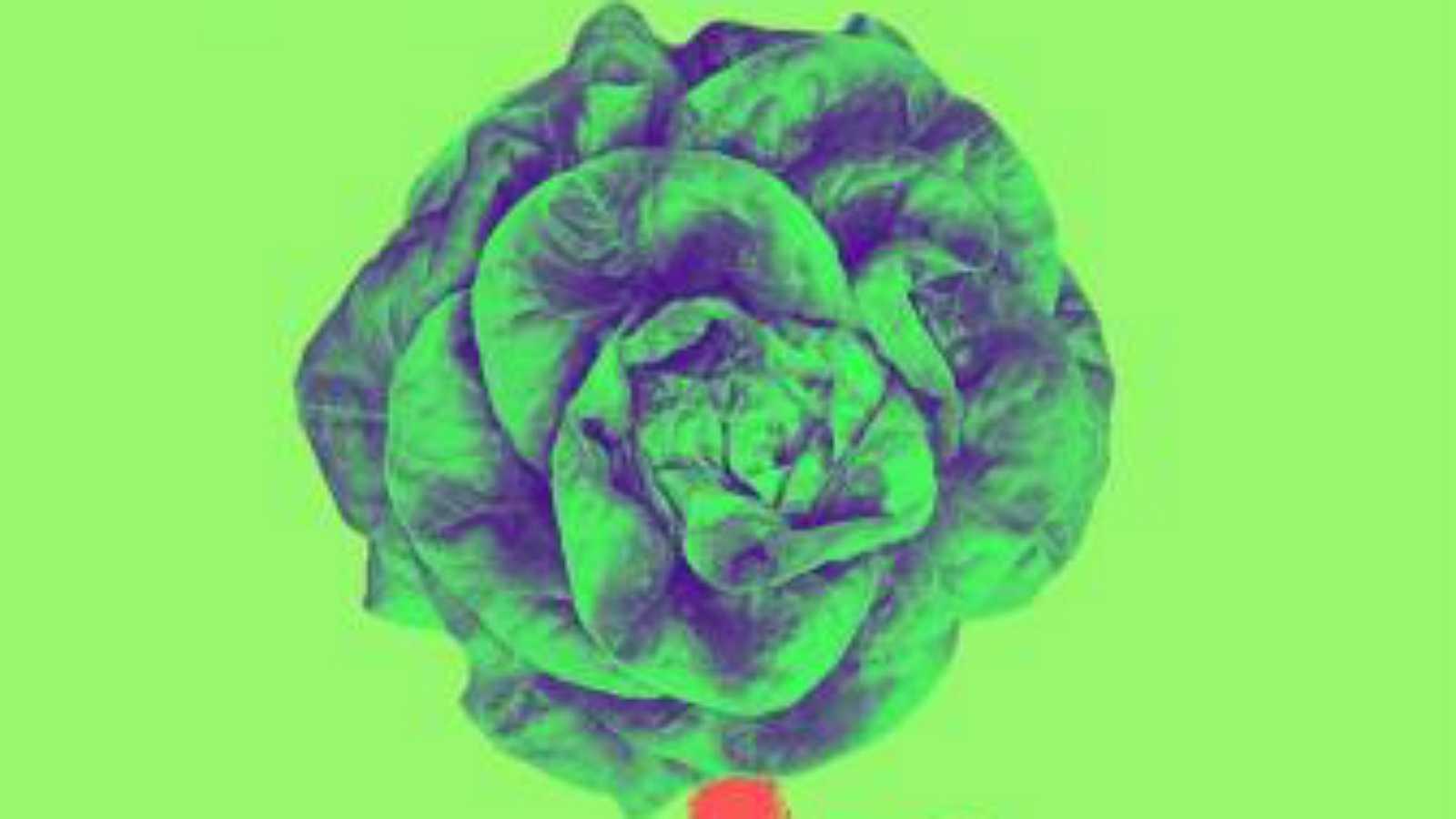 MediAcción - Primera Jornada Ecofeminista de Toledo - 31/10/19 - Escuchar ahora