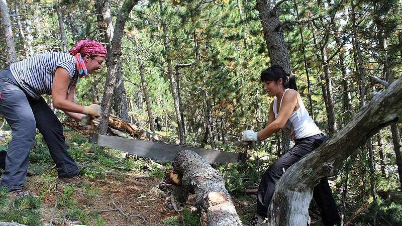Vida verde - Nuevas profesiones en tiempo de emergencia climática - 09/11/19 - escuchar ahora
