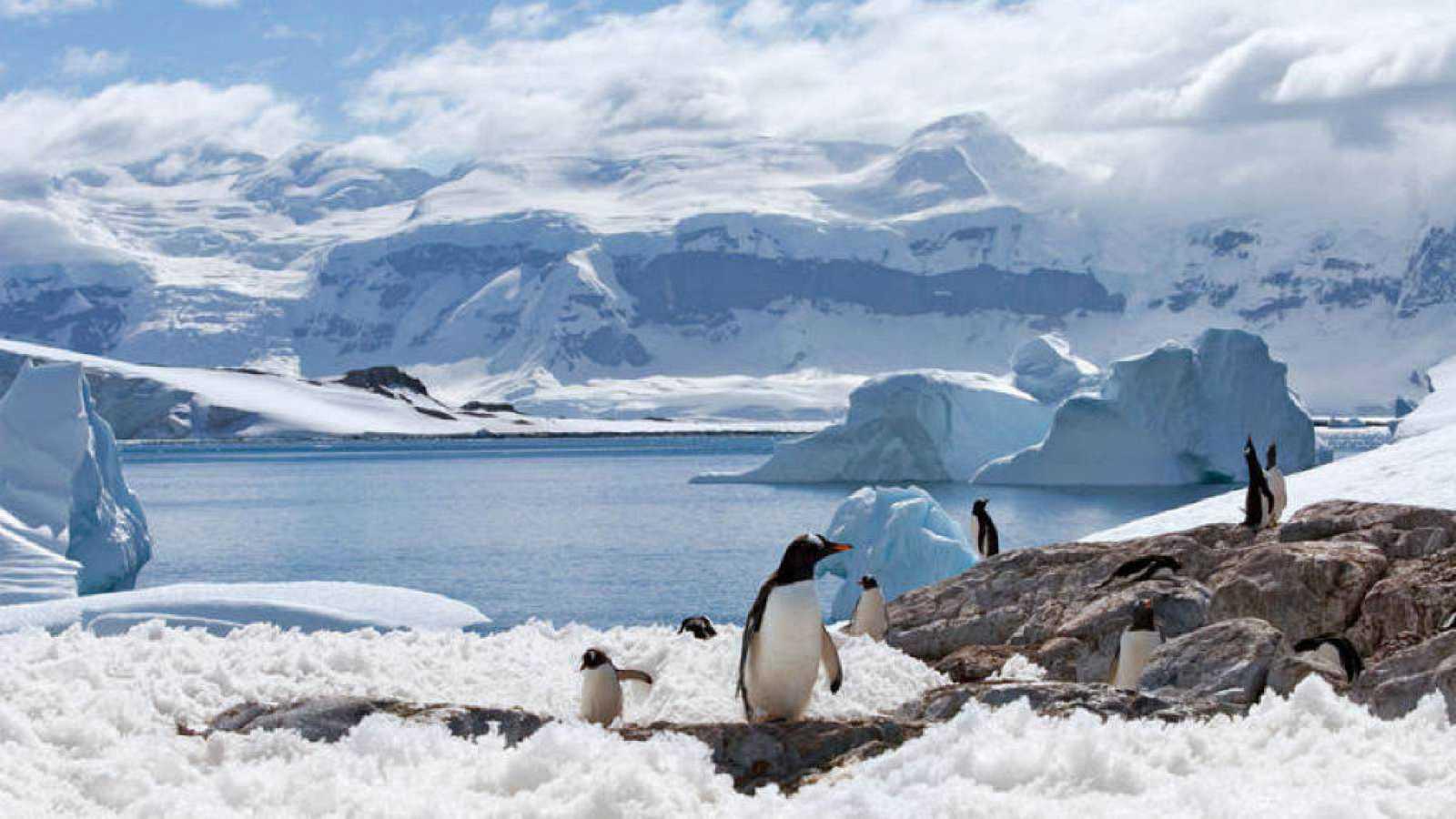 El gallo que no cesa - Anna Cabré de expedición a la Antártida - Escuchar ahora