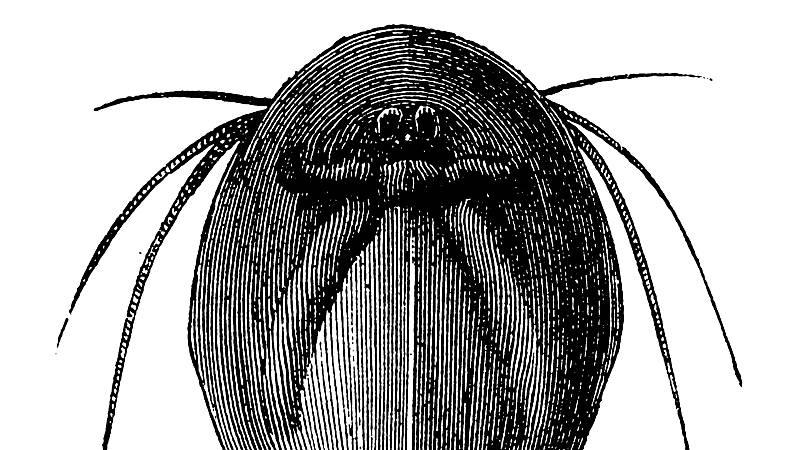 Las mañanas de RNE con Íñigo Alfonso - El animal más antiguo del mundo vive en Ávila - Escuchar ahora