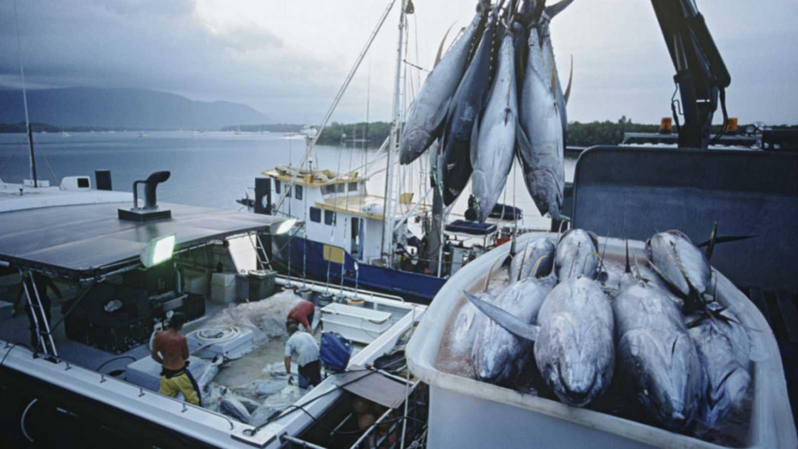 Agro 5 - Pesca sostenible (FAO-ICCAT-UE) para alimentar al mundo - 23/11/19 - Escuchar ahora