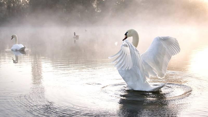 Gran repertorio - TCHAIKOVSKY: El Lago de los Cisnes - 04/12/19 - escuchar ahora
