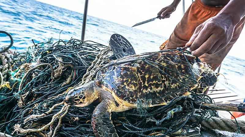 Españoles en la mar en Radio 5 - Cobrar por pescar basura - 20/12/19 - Escuchar ahora