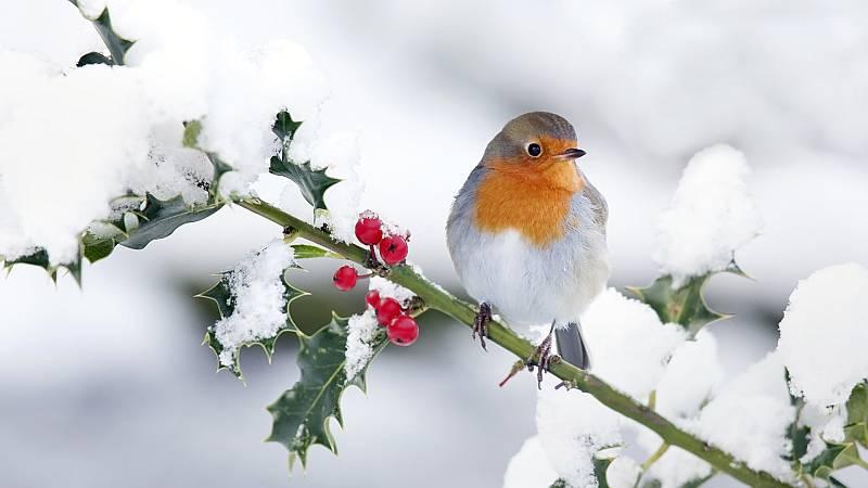 Vida verde - Pájaros, huertos y comidas - 28/12/19 - escuchar ahora