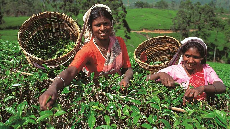 Crónicas de un nómada- Té de Sri Lanka - 12/01/19 - Escuchar ahora