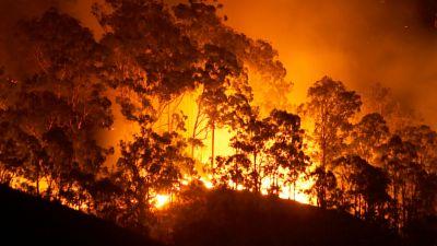 """Reserva natural - Australia en llamas: """"El humo ya ha dado una vuelta entera a la Tierra"""" - 15/01/20 - Escuchar ahora"""
