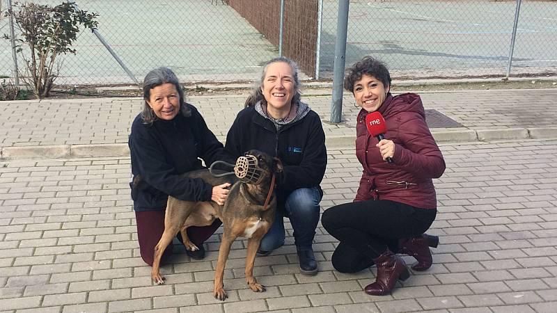 Todo Noticias - Mañana - Visitamos el Centro de Protección Animal de Madrid - Escuchar ahora