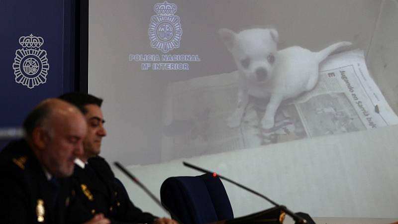 14 horas - La policía rescata 270 perros tras desmantelar dos criaderos ilegales - Escuchar ahora