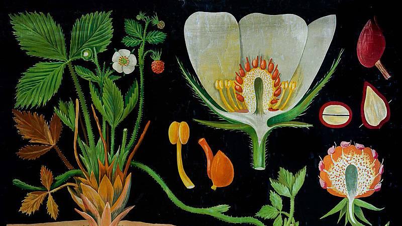 Vida verde - Exposición 'Herbarios imaginados' - 25/01/20 - escuchar ahora