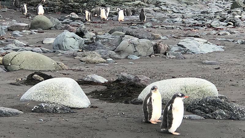 """24 horas - Riba: """"Las condiciones de vida en la Antártida son muy cambiantes en muy poco tiempo"""" - Escuchar ahora"""