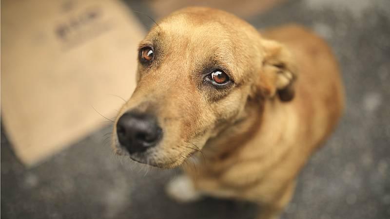 Todo Noticias Tarde - Tráfico ilegal de cachorros - Escuchar ahora