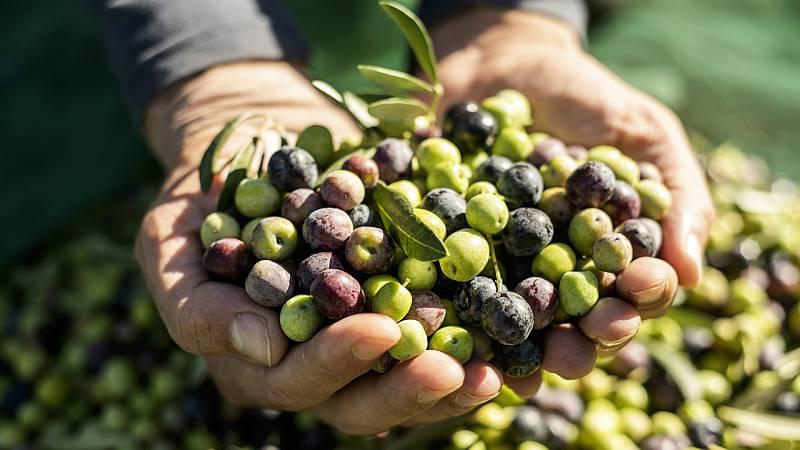 Mundo rural - Crisis en el sector del aceite de oliva y las aceitunas - 12/02/20 - Escuchar ahora
