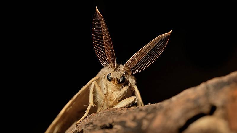 Entre probetas - Transgénicos para combatir plagas de insectos - 13/02/20 - Escuchar ahora