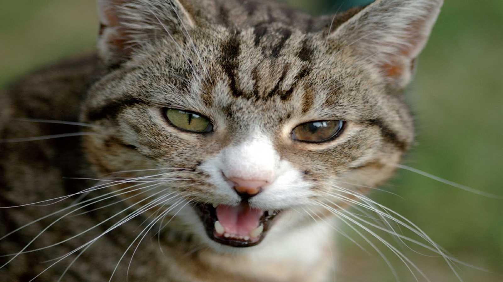 El arca de Noé - Estrés y salud del gato - 22/02/20 - Escuchar ahora