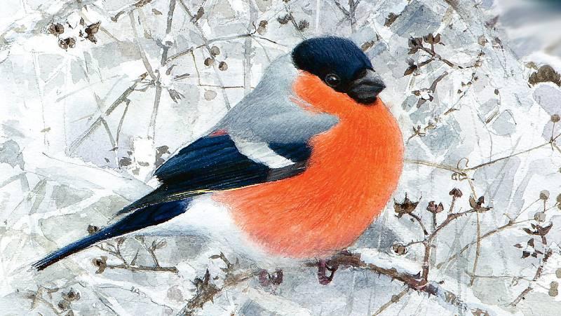 Vida verde - Aves que veo en invierno - 22/02/20 - escuchar ahora