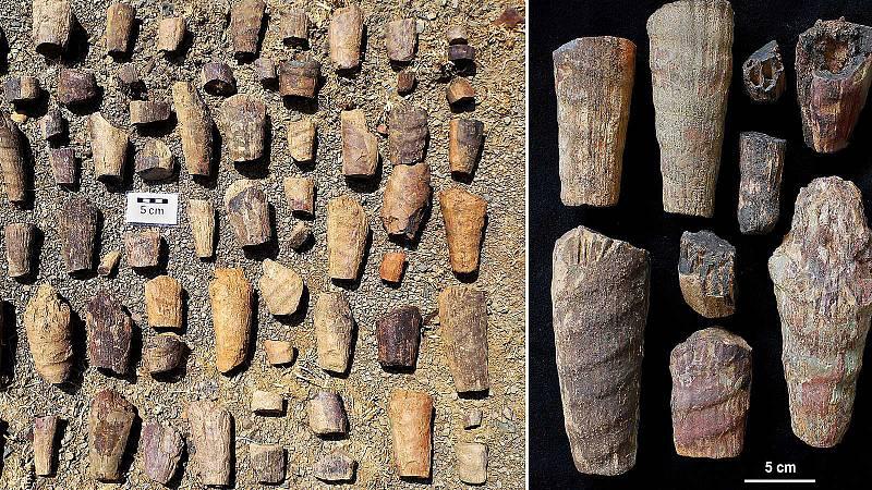 Marca España - Localizado un raro fósil marino en el Parque Nacional de Cabañeros - 02/03/20 - escuchar ahora