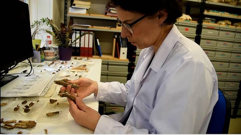 Mujer Científica Cantabria - 04/02/20 - Escuchar ahora