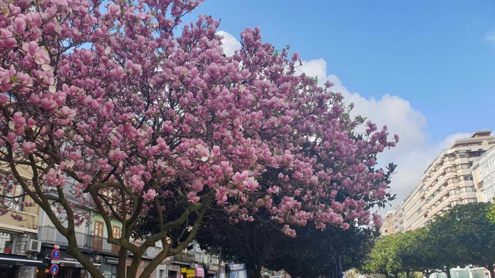 Las mañanas con Pepa Fernández - Primera hora: Radio de mayores, la primavera y 13 rue del percebe radiofónico - 20/03/20 - escuchar ahora