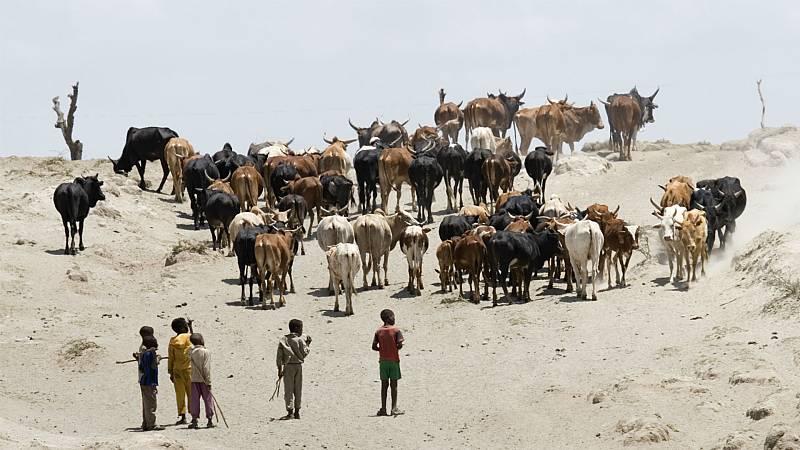 Reportajes 5 Continentes - Las guerras del ganado en África - Escuchar ahora